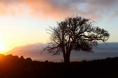Kula, Maui sunset