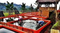 cara ternak ikan lele di kolam terpal