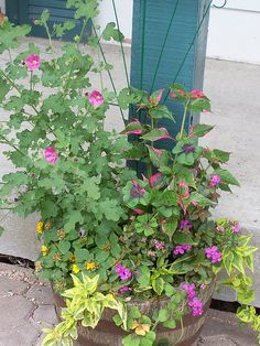 pink & green plant in container