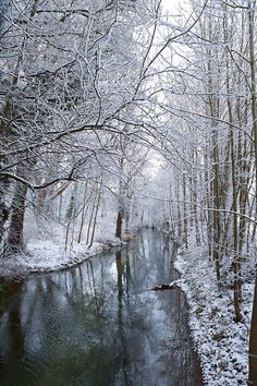 Snow-covered trees surround the Vesle river in Reims, northeastern France.  Picture: FRANCOIS NASCIMBENI/AFP/Getty Images.