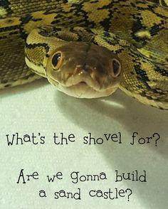 Charlie the Reticulated Python #snakelivesmatter