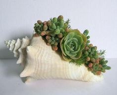 Seashell Planter Succulent Planter Beach Decor Real by rosekraft