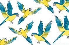 Feathers by @picturette #Picturette #Feathers #Birds #Illustration