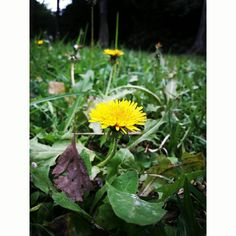 #Fotografía #Amarillo #Green #Verde #Natural #Naturaleza #SamsungJ7 #UNMSM #Lima #Perú #Beautiful #Flores #Flowers