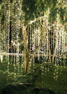 Image result for garden ideas with fairy lights
