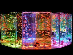 Aquarium.  Colourful and creative fish bowls from Japan