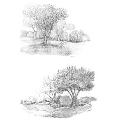 Drawing by Jacob Yona. Observational drawings of olive trees #Trees #observation #drawing #life #nature #pencil