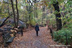 Central Park en otoño (no te puedes imaginar cómo es)