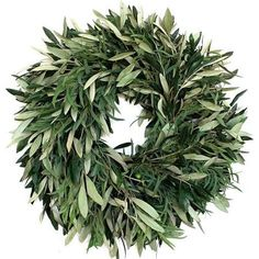 preserved olive branches - Google Search
