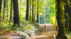 daruvar - roman forest