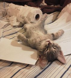 Kitten Finishes Doctoral Thesis