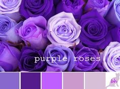 Color Palette ::: purple roses