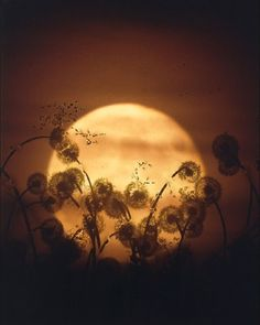 Make a few dandelion wishes (the ones that really matter), breathe deeply, and blow them to the moon. =)