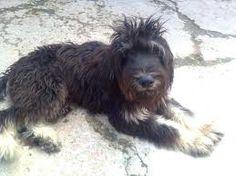 - Dogs, Animals, Dog Breeds, Animales, Animaux, Pet Dogs, Doggies, Animal, Dog