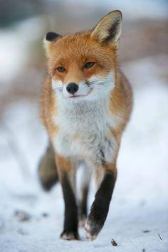 Richard Bowler Wildlife Photography