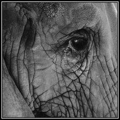The Elephant's Eye: Photo by Photographer JeffS L - photo.net