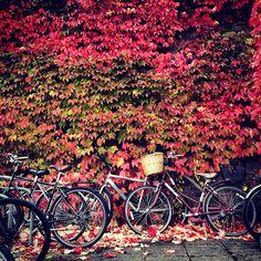 Autumn in Cambridge