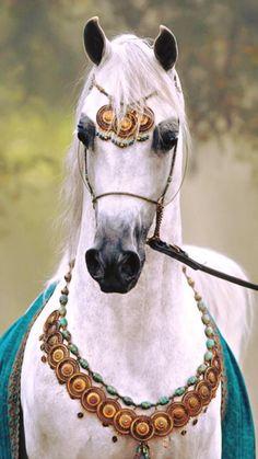 55 Best Arabian Horses Images Horses Beautiful Horses