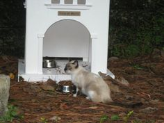 Help the Loews Orlando cats--the hotel chain has had traps set to have them taken to animal control to be exterminated!