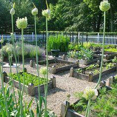 READER PHOTOS Amy 39 s garden in Ohio Fine Gardening
