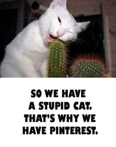 Cat eating cactus. I have a couple dorks like this at home! Lol!