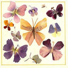 (, ,) (solodstudio) Tags: flowers pressed herbarium oshibana
