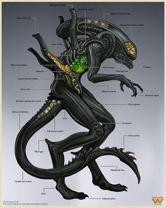 Image may contain: text Alien Vs Predator, Predator Alien, Giger Alien, Hr Giger, Aliens Movie, Aliens And Ufos, Alien Creatures, Fantasy Creatures, Aliens Colonial Marines