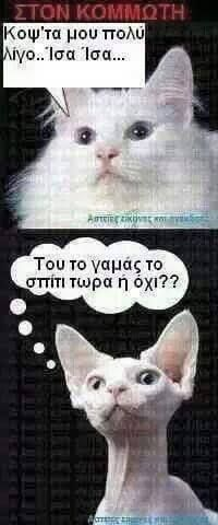 Funny Status Quotes, Funny Greek Quotes, Funny Statuses, Funny Qoutes, Happy Animals, Funny Animals, Funny Photos, Funny Images, Greek Memes