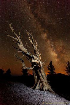 Steven Christenson: Night &emdash; Famous - Ancient Bristlecone and Ancient Light