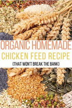 Wondering how to make chicken feed for broilers? How about how to make chicken feed for layers? Organic chicken feed formulation should be easy! Raising Backyard Chickens, Backyard Farming, Pet Chickens, Urban Chickens, Organic Chicken Feed, Chicken Feed Diy, Diy Chicken Coop Plans, Chicken Coops, Broiler Chicken