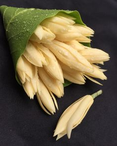 "Magnolia Alba ""White Champaca"" จำปี home Purple Wallpaper Iphone, Magnolia Flower, Cut Flowers, Amazing Flowers, Flower Decorations, Pink Roses, Tropical, Banana, Fruit"