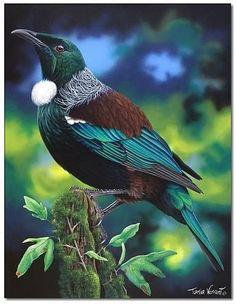 Enchanting Tui by Tania Verrent Most Beautiful Birds, Pretty Birds, Beautiful Creatures, Animals Beautiful, Cute Animals, Exotic Birds, Colorful Birds, Tui Bird, New Zealand Art