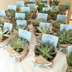Jen, our succulents look amazing as party favors. Thank you for sharing your pic! We love your display!!!!