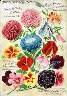 vintage floral seed packages
