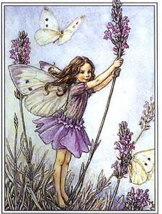 The Lavender Fairy. Vintage flower fairy art by Cicely Mary Barker. Taken from 'Flower Fairies of the Garden'. Click through to the link to see the accompanying poem. Cicely Mary Barker, Elfen Fantasy, Fantasy Art, Vintage Wall Art, Vintage Prints, Vintage Paper, Flower Fairies Books, Vintage Fairies, Vintage Flowers