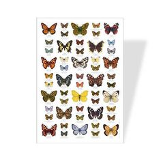 Learn about over 50 common butterflies with this wonderful poster. Each beautiful illustration includes the English, French and German names.