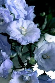 "April 26: Nor is there salvation in any other, for there is no other name under heaven given among men by which we must be saved."" Acts 4:12   (Photo: Campanula 'Blue Wonder')"