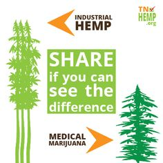 Despite misconception, industrial hemp & medical marijuana look quite different. I see it, do you?