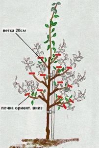 Pruning Fruit Trees, Tree Pruning, Trees To Plant, Vegetable Garden, Garden Plants, House Plants, Hydroponic Strawberries, Grafting Plants, Summer House Garden
