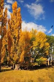 hogsback south africa - Google Search Where The Heart Is, Autumn Inspiration, Homeland, So Little Time, Live, South Africa, Paradise, Southern, African