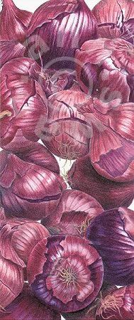 Ann Swan - Purple Onions.  Love these!