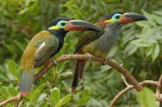 Вдохновляемся у природы: яркие птички - Ярмарка Мастеров - ручная работа, handmade