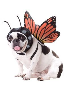 Animal Planet Butterfly Pet | California Costume Collections