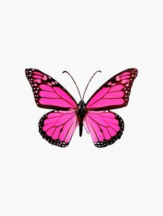 Butterfly Discover Hot Pink Butterfly Sticker by EmmaGSheehan Trendy hot pink butterfly merch Millions of unique designs by independent artists. Find your thing. Bedroom Wall Collage, Photo Wall Collage, Picture Wall, Purple Butterfly Tattoo, Butterfly Drawing, Purple Butterfly Wallpaper, Papillon Rose, Hot Pink Background, Pink Photo
