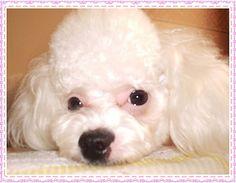 Olá pessoal!! Hoje, 4 de outubro, comemora-se o Dia Mundial dos Animais, o Dia do cachorro e o Dia de São Francisco de Assis, considerado o protetor dos animais pelos católicos. Uma data tão impor…