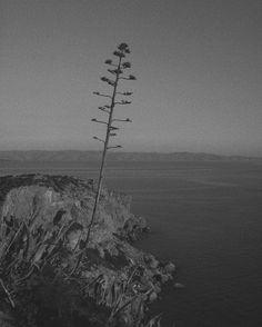 Iconic capture in Greece by @alexander_wessely (shoot on Leica M3) via Leica on Instagram - #photographer #photography #photo #instapic #instagram #photofreak #photolover #nikon #canon #leica #hasselblad #polaroid #shutterbug #camera #dslr #visualarts #inspiration #artistic #creative #creativity