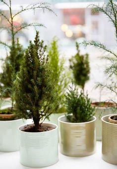 Mini ferns in Anne Black ceramics. Birgitta Drejer / Sisters Agency.
