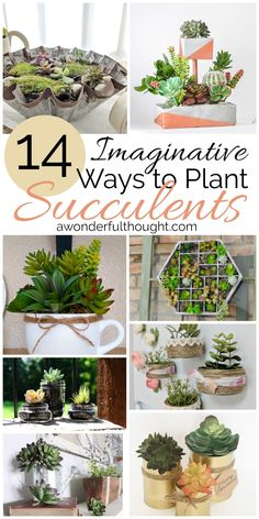 Are you looking for imaginative ways to plant succulents? Here are 14 great examples of creative succulent planters. From lanterns to tuna cans, there are so many great ideas here that will get you taken care of! Propagate Succulents From Leaves, Growing Succulents, Succulents In Containers, Cacti And Succulents, Planting Succulents, Planting Flowers, Container Flowers, Container Plants, Container Gardening