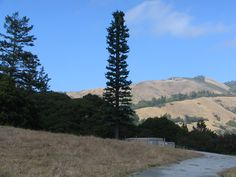 Very Tall Slim Ugly Concealed Tree Cell Tower- out of place Towers, Being Ugly, Slim, Mountains, Places, Nature, Travel, Naturaleza, Viajes