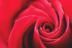 Free Image on Pixabay - Rose, Red, Swirl, Background Happy Rose Day Wallpaper, Rose Wallpaper, Red Flowers, Red Roses, Flowers Nature, Tiffany Blue Weddings, Valentines Day Holiday, Red Images, Extreme Close Up